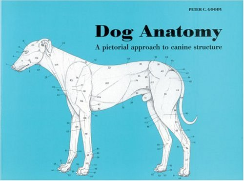 Dog anatomy a coloring atlas