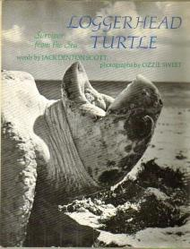 essay on pet turtles