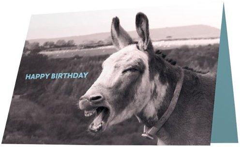 Wxicof Donkey Mule Greeting Cards